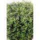 Eucalyptus artificiel carré 40cm