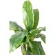 Bananier artificiel 3 troncs 130 et 240cm