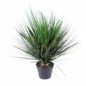 Onion Grass artificiel round 60 à 75cm