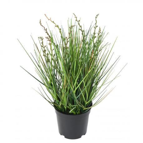 Berry Onion Grass artificiel 35 à 150cm