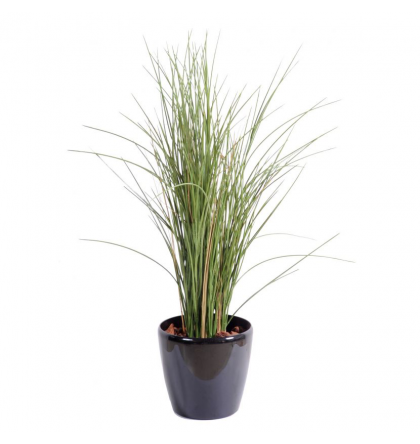 Herbe Honey Grass artificiel 80 et 110cm | Graminée artificielle