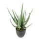 Aloevera artificielle 60 et 70cm