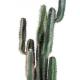 Cactus artificiel Finger 75 à 185cm