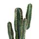 Cactus artificiel Cereus 70 à 160cm