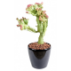 Cactus artificiel 45cm
