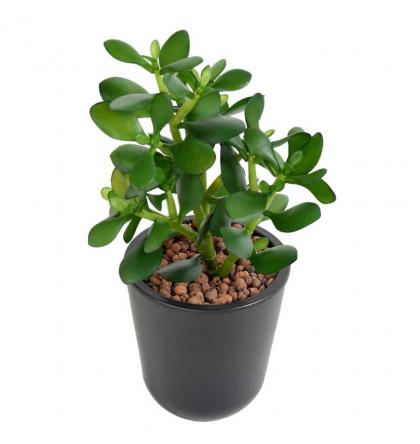 Crassula Jade Plant artificiel 30cm