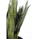 Sansevieria artificiel large 90cm