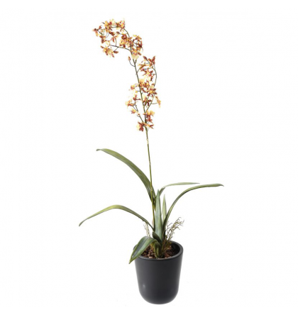 Orchidée artificielle Oncidium 60cm