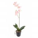 Orchidée artificielle Phaleanopsis 90cm