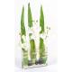 Bouquet artificiel Phalaneopsis 50cm