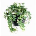 Lierre artificiel 308 feuilles - 35cm