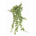 Lierre artificiel panaché 504 feuilles - 60cm