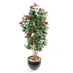 Hibiscus (110cm)