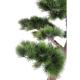 Pin Bonsai artificiel UV 200cm