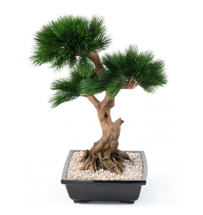 Bonsai Pin en coupe artificiel 70cm