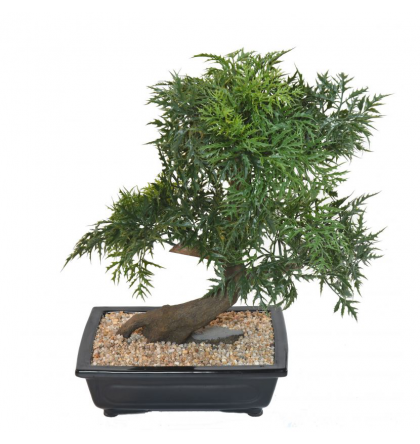 Bonsai artificiel Aralia en coupe 50 à 95cm
