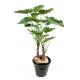 Alocasia calodora (120cm)