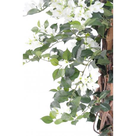 Bougainvillée lianes (180cm)