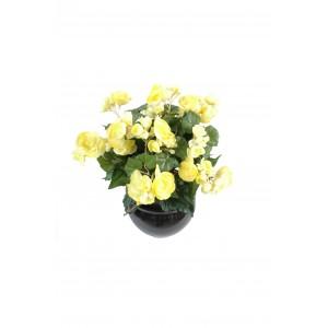 Begonia (35cm)