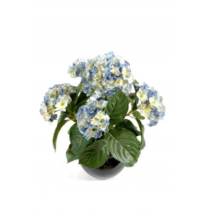 Hortensia (50cm)