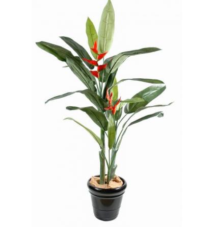 Héliconia (170cm)