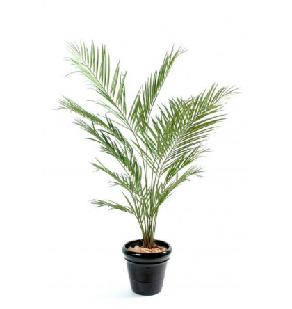 Kentia artificiel New Palm 150cm
