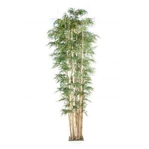 Bambou New Géant