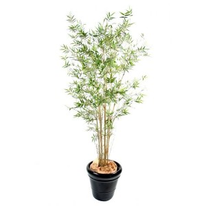 Bambou oriental new