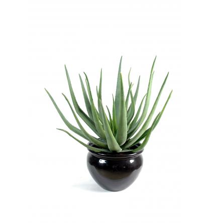 Aloevera artificiel 55 et 70cm