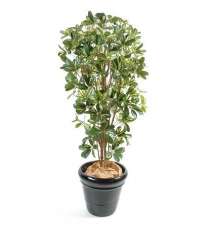 Schefflera (110cm)