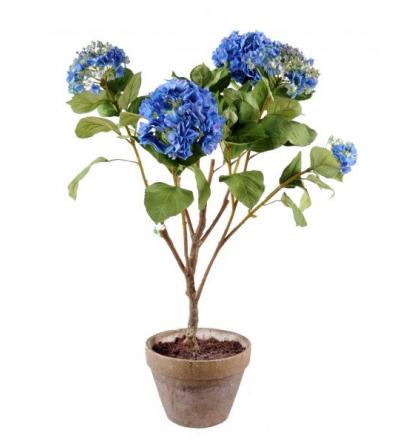 Hortensia avec pot terre (100cm)