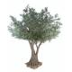 Olivier tree (400cm)