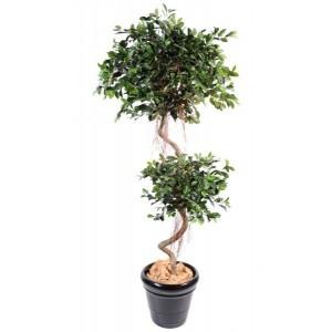 Ficus spirale 2 boules 185cm