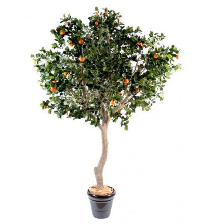 Oranger (280cm)