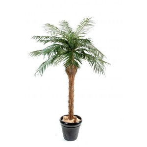 Palmier Phoenix (150cm)