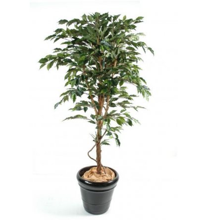 Ficus artificiel tronc simple grandes feuilles de 120 à 270cm