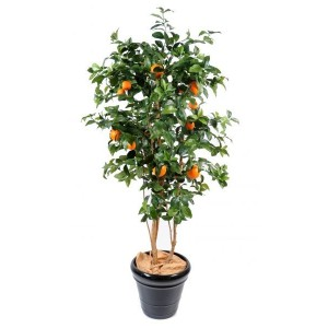 Oranger new (150cm)