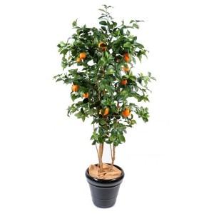 Oranger new (180cm)