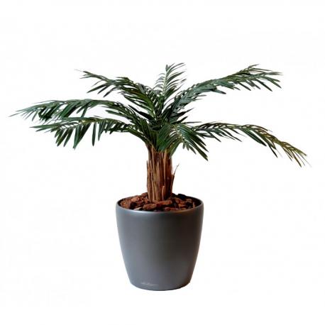 Cycas palmier (180cm)