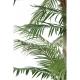 Phoenix 3 troncs(225cm)