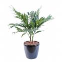 Palmier Parlour artificiel plante 65cm