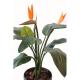 Strelitzia plante (150cm)