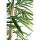 Bambou feuilles larges
