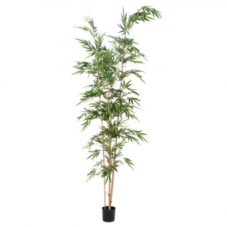 Bambou assymétrique