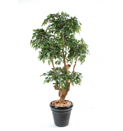 Ficus artificiel 5 têtes Natasja 170cm