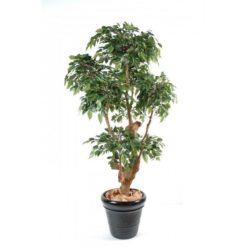 Viva verde professionnel de la plante artificielle haut for Ficus artificiel