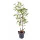 Bambou Verts S artificiel 150 à 290cm
