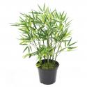 Bambou articiel vert Plast 60 et 90cm