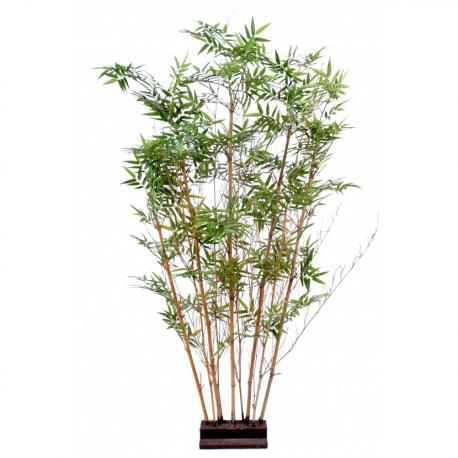 Bambou Oriental Haie