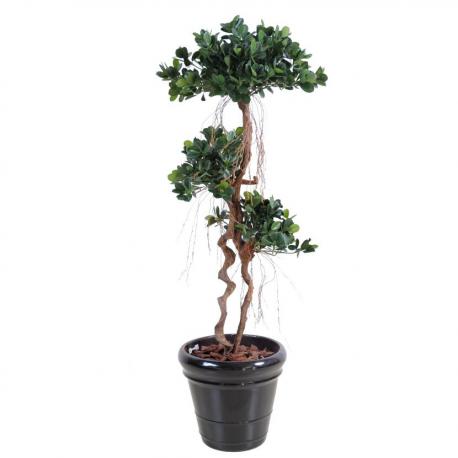 Ficus Panda New 140cm